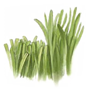 geschnittenem-gras